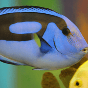 buying tropical fish