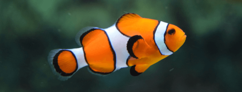 caring for tropical fish