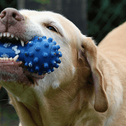 cheap dog toys