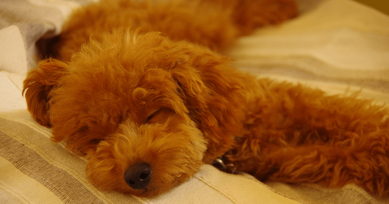 hyaluronic acid for dogs