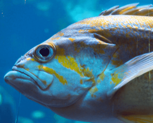 list of tropical fish
